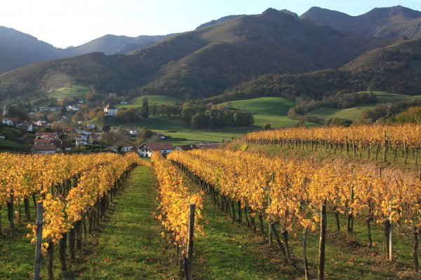 vignoble irouleguy-vin-arnoa-wine-irouleguy vineyard-AOC irouleguy-visite chai-bodega-tasting of wine-degusation de vin-vigneron