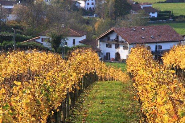 Irulegiko arnoa, vignoble d'irouleguy, irouleguy wineyeard, route du vin au pays basque, wine road in the basque country